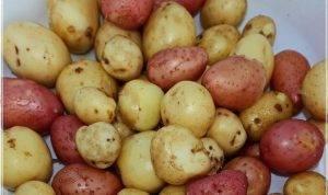 Баранина с жареной картошкой в казане - 0